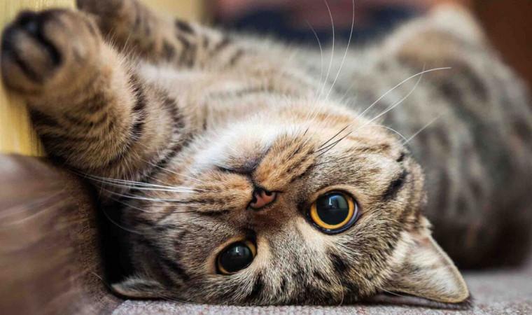Gemesin! Ini 7 Jenis Ras Kucing Terlucu di Dunia yang Cocok jadi Selebgram
