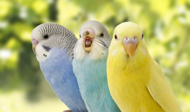 Mungil dan Menggemaskan! Ini Jenis Burung Parkit Paling Populer untuk Dipelihara