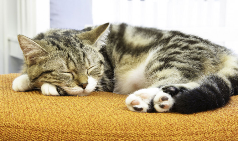 Jangan Panik! Kucing Tidur Seharian Bisa Jadi Bukan Gejala Penyakit, Lho
