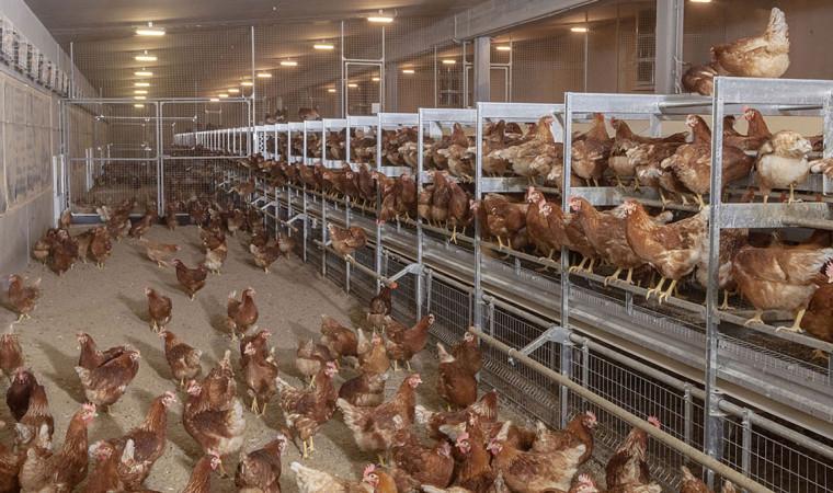 Berbagai Inspirasi Keren Untuk Model Kandang Ayam Terbaikmu