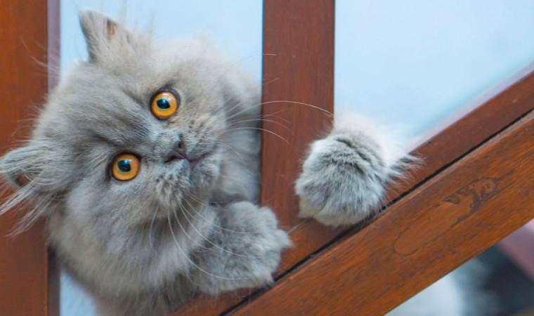 4 Langkah Awal Cara Memandikan Kucing Persia di Rumah