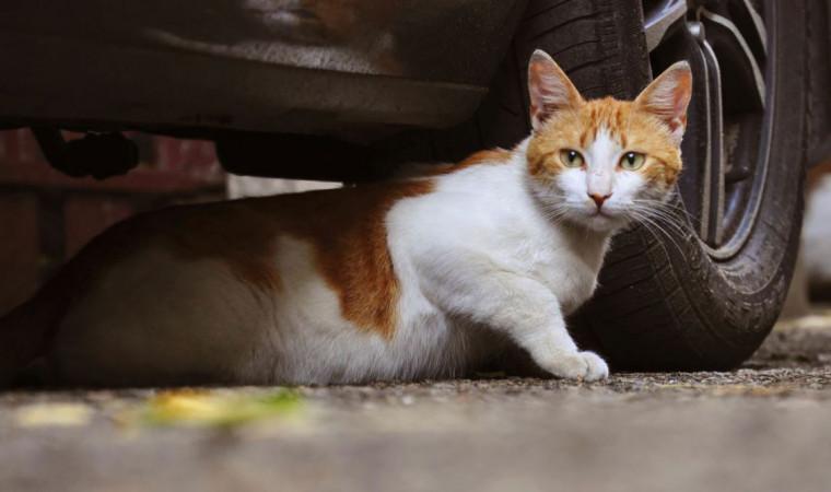 Panduan Cara Menangkap Kucing Liar Tanpa Menyakitinya
