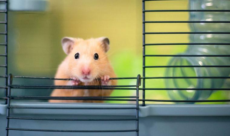 3 Jenis Kandang Hamster Terbaik dan Cara Memilihnya