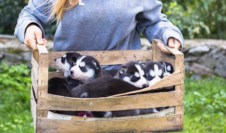 Pemula Wajib Tahu 12 Cara Merawat Anak Anjing yang Aman