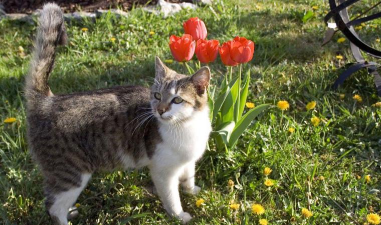 Berbagai Cara Mengusir Kucing Liar Tanpa Disakiti dengan Mudah