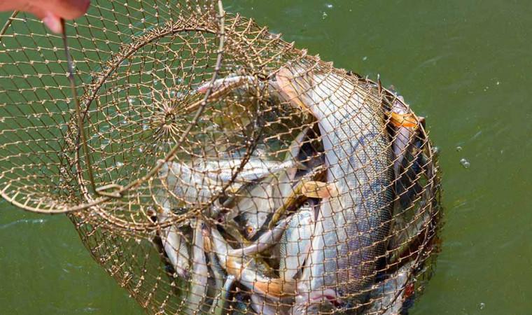 Berkenalan dengan 23 Jenis-jenis Ikan Air Tawar Populer di Indonesia