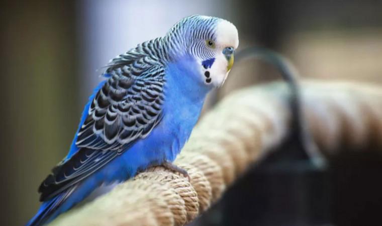 6 Cara Merawat Burung Parkit Dengan Tepat Agar Tidak Cepat Mati
