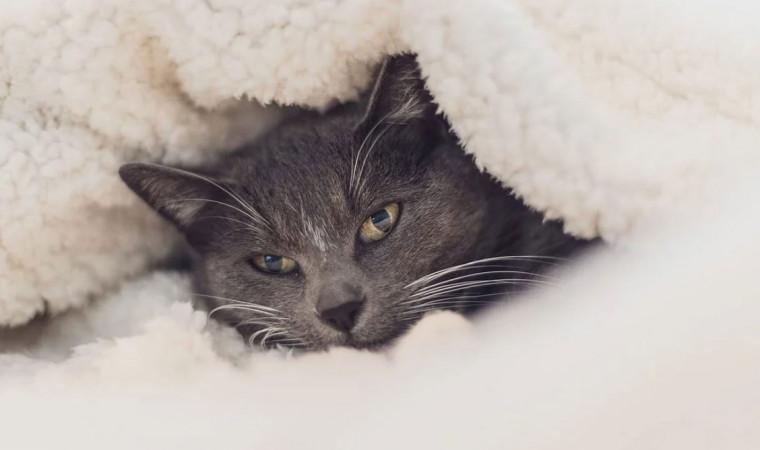 Ternyata Ini Ciri-Ciri Kucing Kedinginan yang Tidak Boleh Diabaikan
