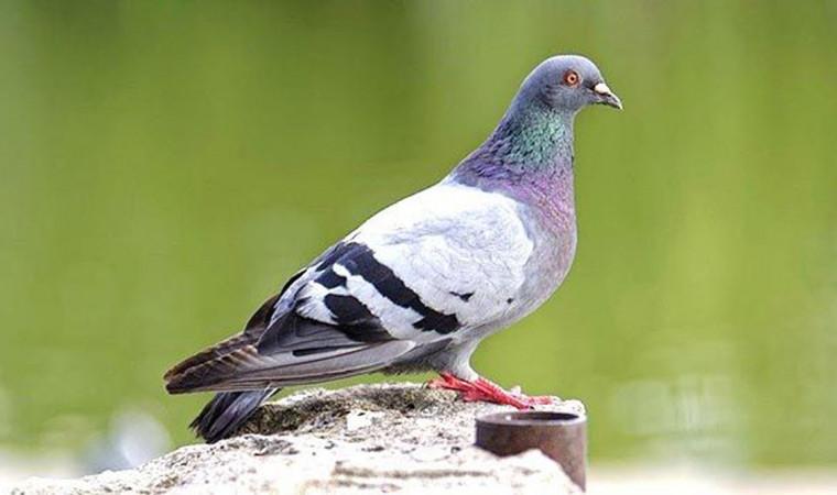 6 Cara Mengatasi Burung Gangguan Pencernaan dengan Mudah