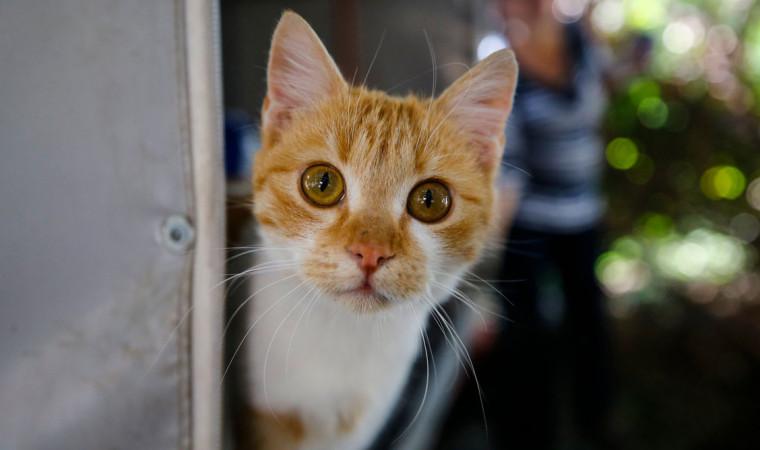 94 Nama Kucing Jepang yang Populer, Lucu, Beserta Artinya