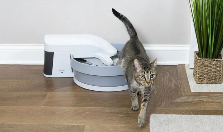 6 Cara Menghilangkan Bau Pesing Kucing di Dalam Rumahmu