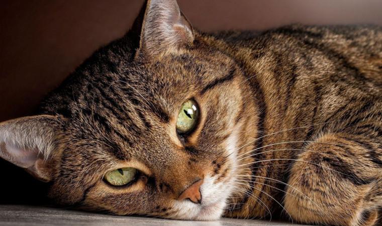 3 Cara Mengetahui Umur Kucing Kesayangan Dengan Tepat Dan Akurat