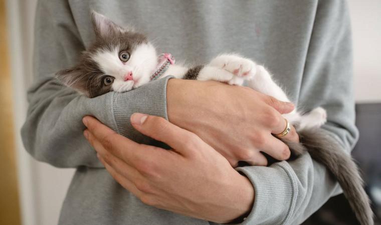 Jangan Kaget! Ini Dia Kisaran Biaya Perawatan Kucing Di Rumah