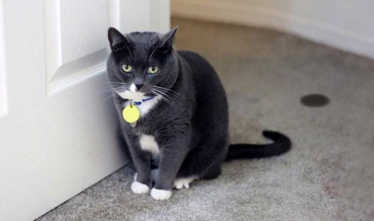 Berbagai Cara Mengobati Kencing Batu Kucing Disertai Penyebab Dan Gejalanya