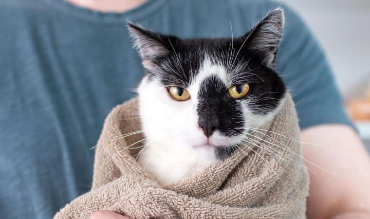 Awas Jamuran, Ini 4 Cara Mengeringkan Bulu Kucing Yang Benar