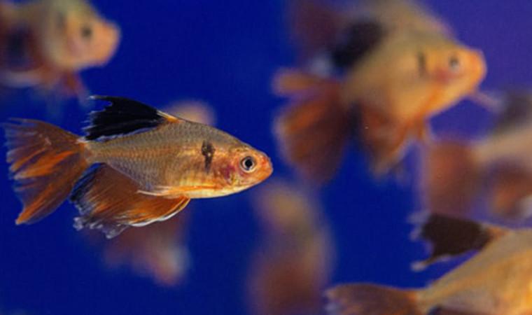 Bukan Cuma Indah, Ini Manfaat Memelihara Ikan Hias Bagi Kehidupan Manusia