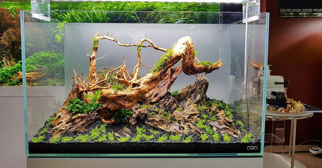 7 Jenis Kayu Aquascape yang Mudah Ditemukan di Sekitar ...